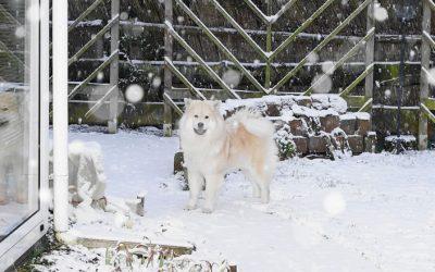 Ambra im Schnee