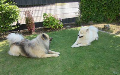 Ambra und Rico