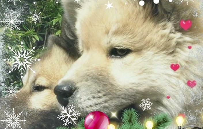 Frohe Weihnachten und alles Gute für 2018!